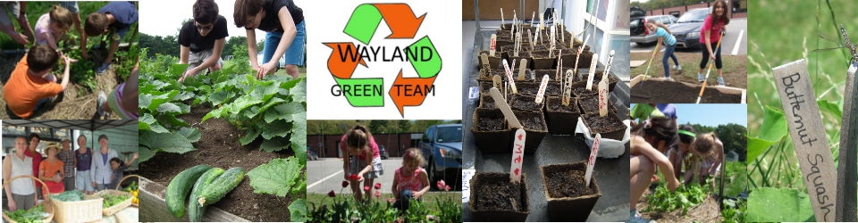 Wayland Green Team